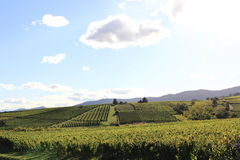 Landscape of the wonderful Alsatian vineyard Royalty Free Stock Photo