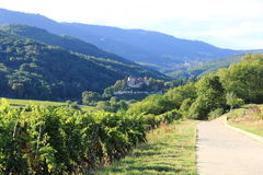 Landscape of the wonderful Alsatian vineyard Stock Images