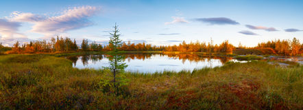 Landscape on wood lake after sunset panorama Royalty Free Stock Images