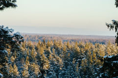 Landscape of the trees, forest Royalty Free Stock Photography