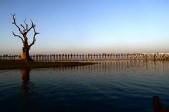 Landscape of wooden bridge and dead tree Stock Photo