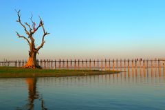 Landscape of wooden bridge and dead tree Stock Photos