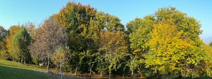 Landscape of woods during the autumn season with warn colors. Blue sky Stock Photography
