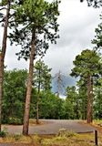 Landscape at Woods Canyon Lake, Coconino County, Arizona, United States. Scenic landscape with Ponderosa Pine trees at Woods Canyon Lake during the summer in Royalty Free Stock Images