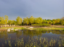 Landscape of woods, reeds and ponds Stock Images