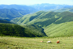 Landscape of Wutaishan Royalty Free Stock Image