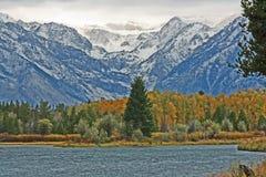 Big spruce on the lake in Grand Teton Royalty Free Stock Photo