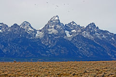 Birds flying over Grand Teton Stock Images