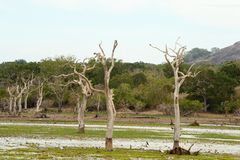Landscape of Yala National Park Royalty Free Stock Photos