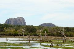 Landscape of Yala National Park Stock Photo