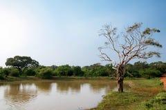 Landscape of Yala National Park, Sri Lanka Royalty Free Stock Images