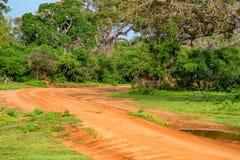 Landscape of Yala National Park, Sri Lanka Royalty Free Stock Image