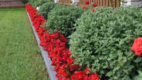 Landscape yard with different flowers stock video footage