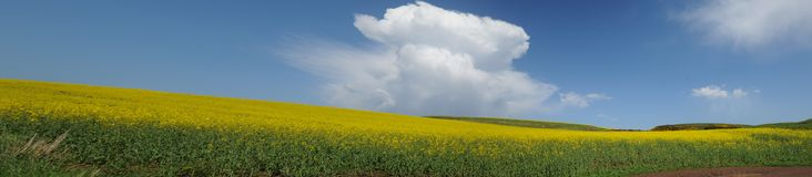 Landscape of yellow Royalty Free Stock Photo
