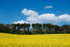 Landscape with yellow canola field Stock Photography