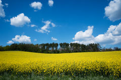 Landscape with yellow canola field Stock Photos