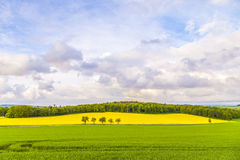 Landscape with yellow canola field Royalty Free Stock Photography