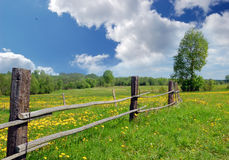 Landscape with yellow dandelions Royalty Free Stock Photography