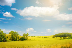 Landscape with yellow field and blue sky Royalty Free Stock Images