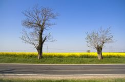 Landscape - yellow field and two trees Royalty Free Stock Images