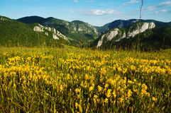 Landscape with yellow flowers and blue sky Royalty Free Stock Image