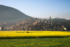 Landscape of yellow flowers and mist coming from the mountains. Landscape of yellow flowers and mist coming from the mountains in the evening covering a small Stock Photos