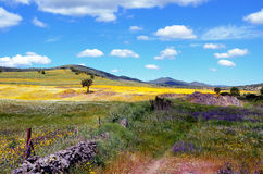 Landscape with yellow and purple flowers Royalty Free Stock Images