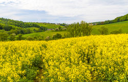 Landscape with yellow rapeseed field Royalty Free Stock Photo