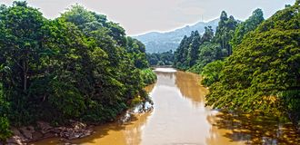 wide panorama Landscape exotic jungle yellow color  river panorama Stock Photography
