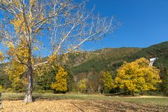 Landscape with yellow trees near Pancharevo lake, Sofia city Region, Bulgaria. Autumn Landscape with yellow trees near Pancharevo lake, Sofia city Region Stock Images