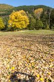 Landscape with yellow trees near Pancharevo lake, Sofia city Region, Bulgaria. Autumn Landscape with yellow trees near Pancharevo lake, Sofia city Region Royalty Free Stock Photos