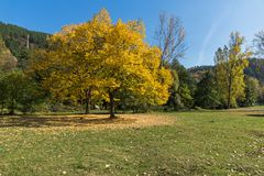 Landscape with yellow trees near Pancharevo lake, Sofia city Region, Bulgaria. Autumn Landscape with yellow trees near Pancharevo lake, Sofia city Region Stock Photos