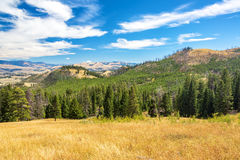 Landscape in Yellowstone National Park royalty free stock images