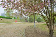 Spring scenery. The landscape of Yifen Park in Taiyuan, Shanxi, China Royalty Free Stock Images