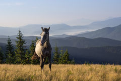 Landscape with the young horse Stock Photo