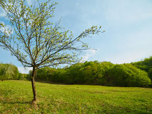 Landscape with a young tree on a meadow Stock Photo
