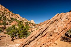 Landscape in Zion National Park. Landscape with rock formations in Zion National Park, Utah, USA Stock Image