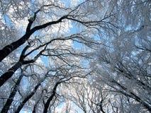 landscape3 χειμώνας Στοκ εικόνες με δικαίωμα ελεύθερης χρήσης