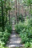 landscaped путь парка Стоковое фото RF