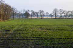 Landscaped. Beautiful field in the nature Royalty Free Stock Photo