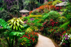 Landscaped colorful and peaceful flower garden in blossom royalty free stock photography