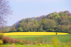 Landscaped field Royalty Free Stock Images