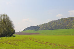 Landscaped field Stock Image