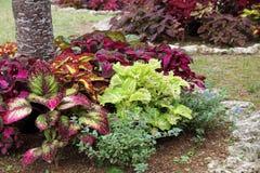 Landscaped flower garden Stock Images