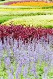 Landscaped flower garden Stock Photo