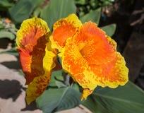 Landscaped flower garden Stock Photos