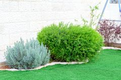 Natural landscaping panorama in home garden. Beautiful view of landscaped garden in backyard. royalty free stock photography