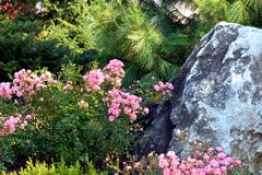 Landscaped garden with flowerbed. Pink roses and big stone Stock Image