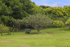 Landscaped Garden Stock Image