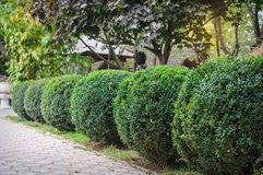 Landscaped green park, trimmed round shape Royalty Free Stock Images